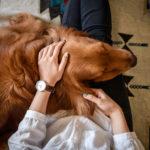 人生100年時代と「老犬ホーム」に私たちが考えるべきことは?
